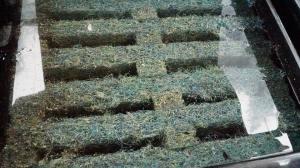 Unité de Traitement : filtration organique