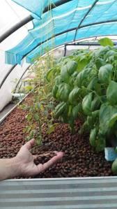 Unité Végétale : Système billes d'argile