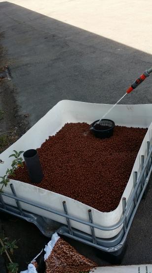 Mise en place et humidification du substrat