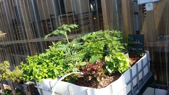 Les plantes grandissent très vite !